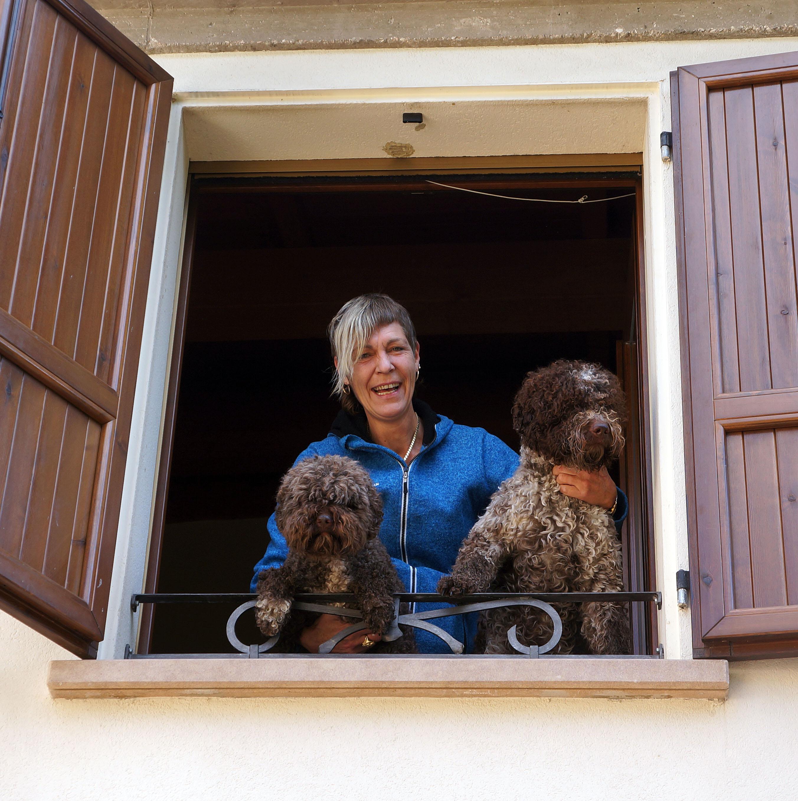 omplassering av hunder hordaland